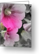 Hollyhock Greeting Cards - Two Hollyhock Abstract Greeting Card by Marjorie Imbeau