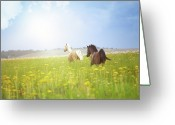 Running Horse Greeting Cards - Two Horses Greeting Card by Arman Zhenikeyev - professional photographer from Kazakhstan