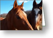 Country Scenes Photographs Greeting Cards - Two Horses In Love Greeting Card by Robert Margetts
