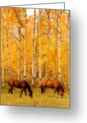 Striking Photography Greeting Cards - Two Horses in the Autumn Colors Greeting Card by James Bo Insogna