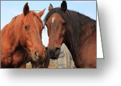 Quarter Horse Greeting Cards - Two Horses Greeting Card by Jim Sauchyn
