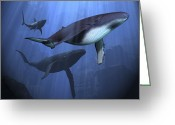 Sea Life Digital Art Greeting Cards - Two Humpback Whales And A Shark Swim Greeting Card by Corey Ford