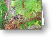 Red Tail Hawks Photo Greeting Cards - Two in the nest. Greeting Card by Robert Webb
