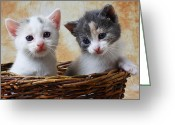 Curious Greeting Cards - Two kittens in basket Greeting Card by Garry Gay