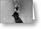 Black And White Cat Greeting Cards - Two Kittens Which Kiss Greeting Card by photographer, loves art, lives in Kyoto