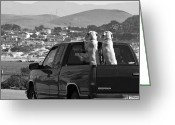 Black And White Greeting Cards - Two Labrador dogs in a truck Greeting Card by Sumit Mehndiratta