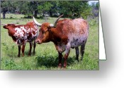 Green Pasture Greeting Cards - Two Longhorns Greeting Card by Linda Phelps