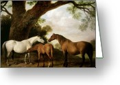 White Greeting Cards - Two Mares and a Foal Greeting Card by George Stubbs