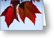 Red Leaves Greeting Cards - Two Old Soldiers Greeting Card by Ross Powell