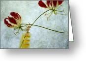 Red Orchid Blooms Greeting Cards - Two orchids Greeting Card by Bernard Jaubert