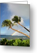 Pacific Islands Greeting Cards - Two Palm Trees On Beach And Rainbow Over Sea Greeting Card by Robert James DeCamp