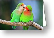 Wild Bird Greeting Cards - Two Peace-faced Lovebird Greeting Card by Feng Wei Photography
