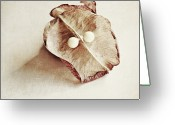 Beginnings Greeting Cards - Two Pearly Seeds Greeting Card by Pamela N. Martin