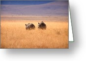 Tanzania Greeting Cards - Two Rhinos Greeting Card by Adam Romanowicz