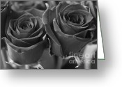 White Greeting Cards - Two Roses Greeting Card by Lynn-Marie Gildersleeve