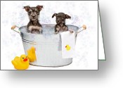 Bubbles Greeting Cards - Two Scruffy Puppies in a Tub Greeting Card by Susan  Schmitz