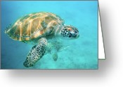 West Indies Greeting Cards - Two Sea Turtles Greeting Card by Matteo Colombo