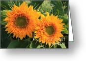 Teddybear Greeting Cards - Two Teddybear Sunflowers Greeting Card by Marjorie Imbeau