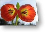 Twins Greeting Cards - Two Tulips Greeting Card by Dan Holm