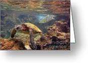 Sea Turtle Greeting Cards - Two Turtles Greeting Card by Bette Phelan