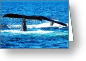 Telephoto Greeting Cards - Two whale tails Greeting Card by Mingqi Ge
