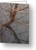 Willows Digital Art Greeting Cards - Two Willows Greeting Card by Wide Awake  Arts