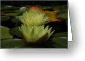 Lily Pad Greeting Cards Greeting Cards - Two Yellow Water Lilies Greeting Card by Chad and Stacey Hall