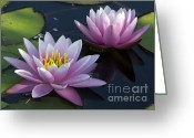 Water Lilly Greeting Cards - Twos Company Greeting Card by Elizabeth Chevalier