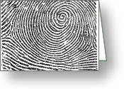 Whorl Greeting Cards - Typical Whorl Pattern, 1900 Greeting Card by Science Source