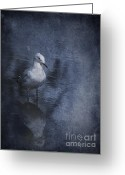 Seagull Photo Greeting Cards - Ubiquitous Greeting Card by Jan Pudney
