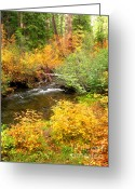 Fall River Scenes Painting Greeting Cards - Uc10.24 Greeting Card by Shasta Eone