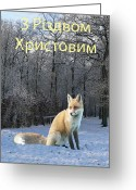 Lesvos Greeting Cards - Ukrainian  Winter Fox  Greeting Card by Eric Kempson