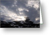 Gloaming Greeting Cards - Under African Skies Greeting Card by Brent  Harris