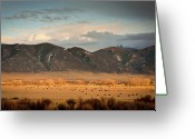 Large Group Of Animals Greeting Cards - Under  Big Skies Of Montana Greeting Card by Doug van Kampen, van Kampen Photography