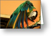 Talking Birds Greeting Cards - Under His Cape Greeting Card by Rene Triay Photography