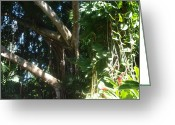 Rain Forrest Greeting Cards - Under The Banyan Tree Greeting Card by Tracy Krapf