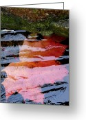 Maple Leaf Greeting Cards - Under The Ice Greeting Card by Will Borden