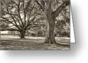 Tonemapped Greeting Cards - Under The Oaks Sepia Toned Greeting Card by Phill  Doherty