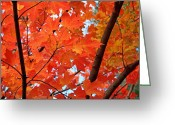 Vibrant Photo Greeting Cards - Under the Orange Maple Tree Greeting Card by Rona Black