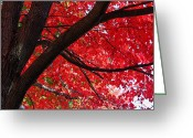 Reds Of Autumn Photo Greeting Cards - Under the Reds Greeting Card by Rachel Cohen