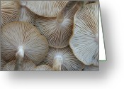 Natural Pattern Greeting Cards - Underside Of Mushrooms Greeting Card by Greg Adams Photography