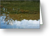 Dinosaurs Photo Greeting Cards - Underwater Landscape Greeting Card by Lisa Holmgreen