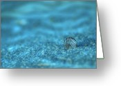 Shell Digital Art Greeting Cards - Underwater Seashell - Jersey Shore Greeting Card by Angie McKenzie
