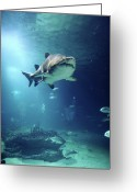 Undersea Greeting Cards - Underwater View Of Shark And Tropical Fish Greeting Card by Rich Lewis