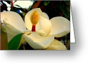 Magnolia Bloom Greeting Cards - Unfolding Beauty Greeting Card by Karen Wiles