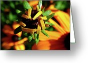Echinacea Greeting Cards - Unfolding Greeting Card by Rona Black