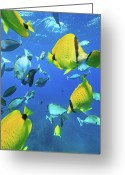 Pacific Islands Greeting Cards - Unicorn Fish Greeting Card by Chris Stankis
