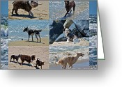 Mutt Greeting Cards - Uninhibited Creatures Greeting Card by Gwyn Newcombe