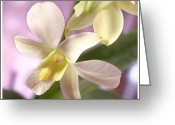 White Flower Greeting Cards - Unique White Orchid Greeting Card by Mike McGlothlen