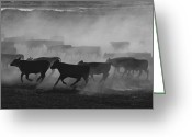 Cattle Greeting Cards - United States, Kansas Cattle Running Greeting Card by Keenpress